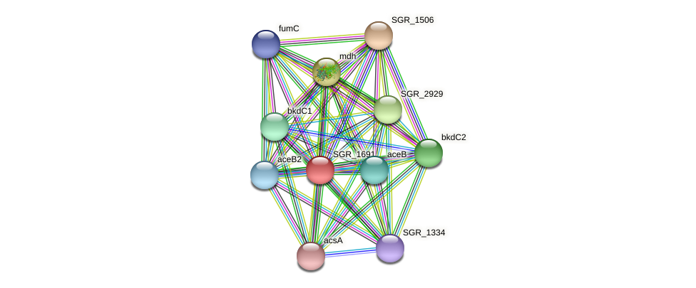 SGR_1691 protein (Streptomyces griseus) - STRING interaction network