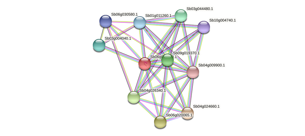 Sb06g029360.1 protein (Sorghum bicolor) - STRING interaction network