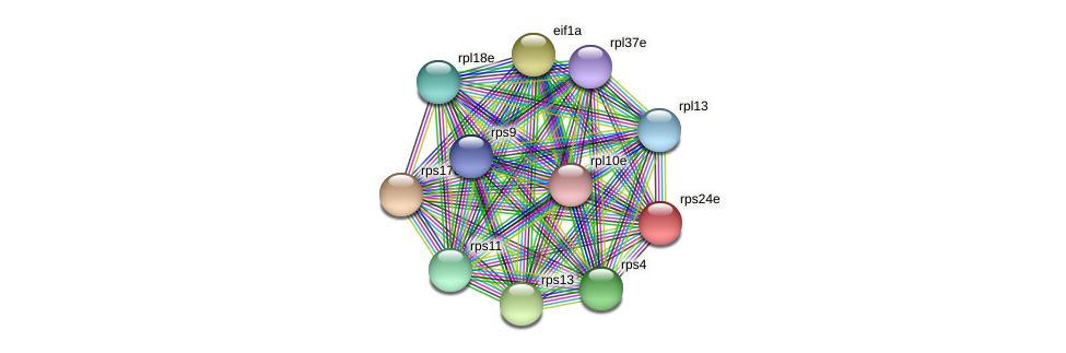rps24e protein (Methanococcus voltae) - STRING interaction network
