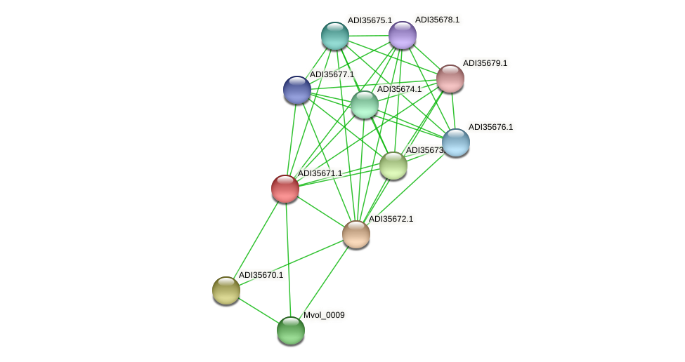 Mvol_0011 protein (Methanococcus voltae) - STRING interaction network