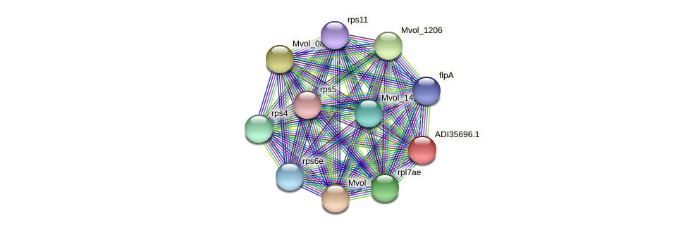 Mvol_0036 protein (Methanococcus voltae) - STRING interaction network