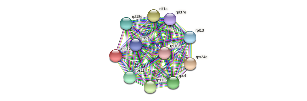 rps17e protein (Methanococcus voltae) - STRING interaction network