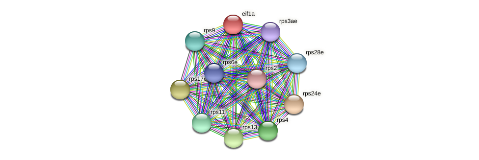 eif1a protein (Methanococcus voltae) - STRING interaction network