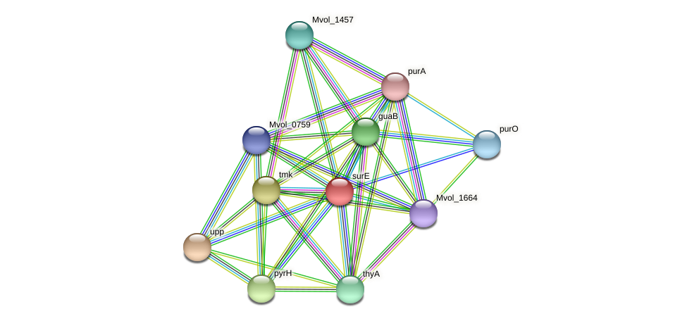 surE protein (Methanococcus voltae) - STRING interaction network