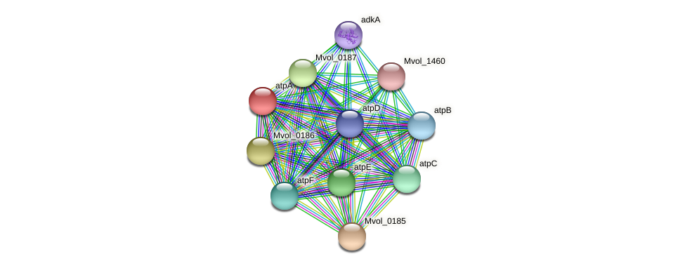 atpA protein (Methanococcus voltae) - STRING interaction network