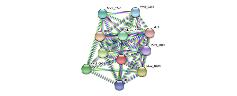 lig protein (Methanococcus voltae) - STRING interaction network