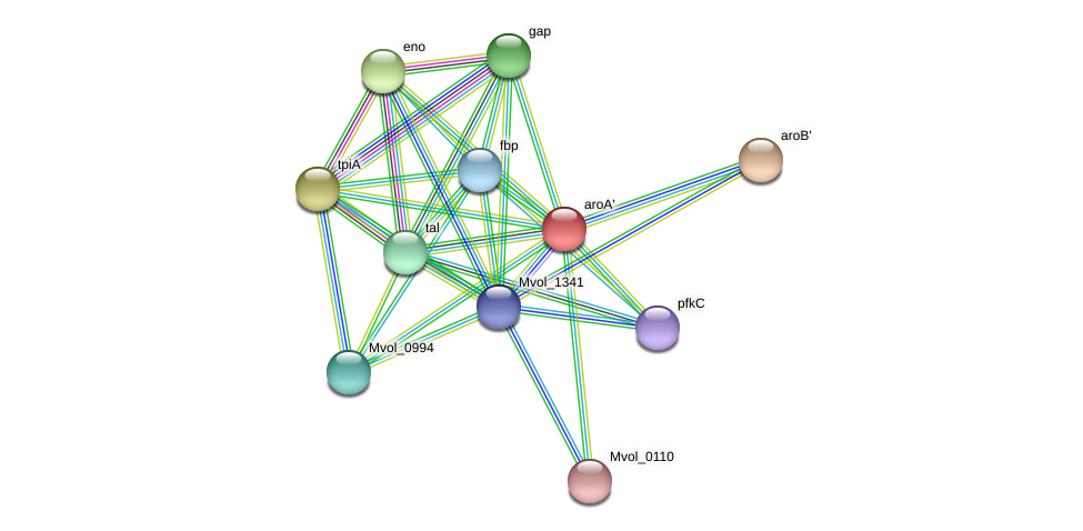 aroA' protein (Methanococcus voltae) - STRING interaction network
