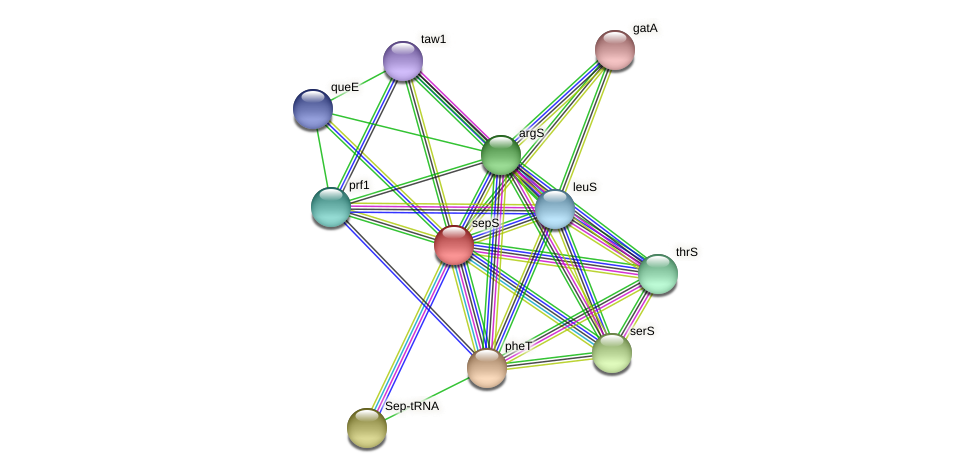 sepS protein (Methanococcus voltae) - STRING interaction network