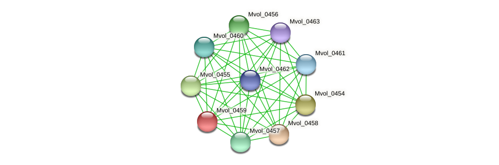 Mvol_0459 protein (Methanococcus voltae) - STRING interaction network