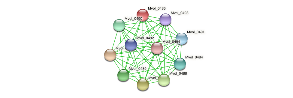 Mvol_0486 protein (Methanococcus voltae) - STRING interaction network