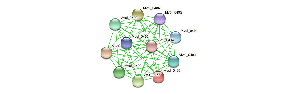 Mvol_0488 protein (Methanococcus voltae) - STRING interaction network