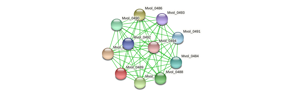 Mvol_0489 protein (Methanococcus voltae) - STRING interaction network