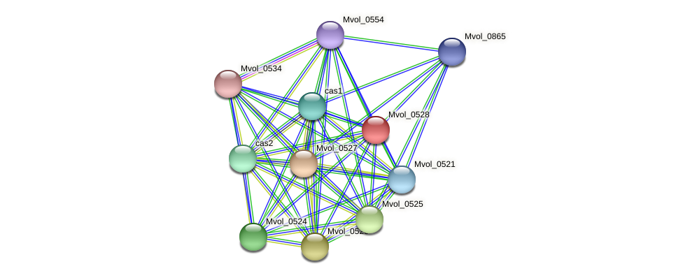Mvol_0528 protein (Methanococcus voltae) - STRING interaction network