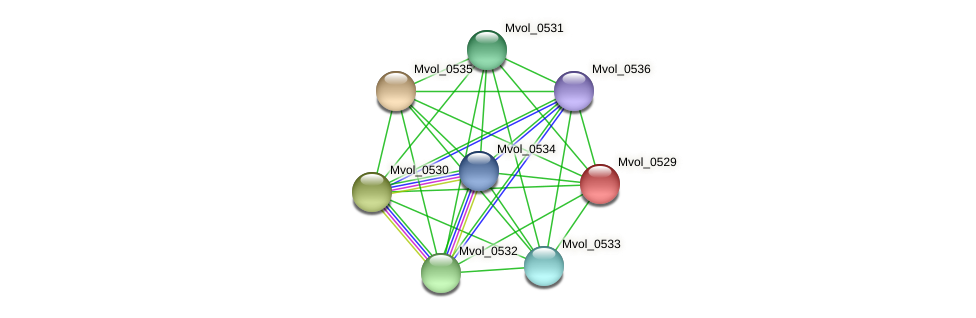 Mvol_0529 protein (Methanococcus voltae) - STRING interaction network