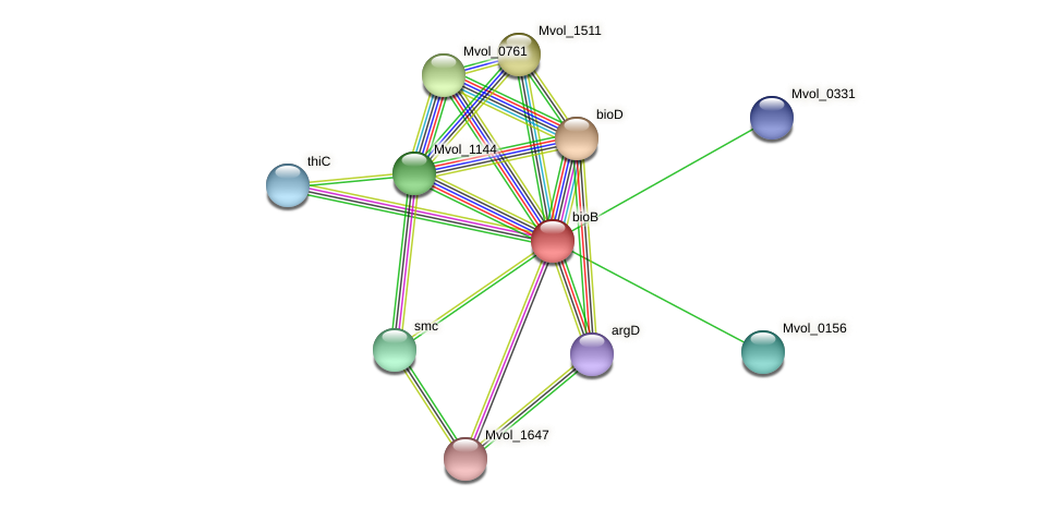 bioB protein (Methanococcus voltae) - STRING interaction network