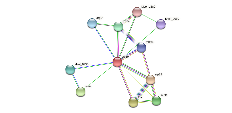 srp19 protein (Methanococcus voltae) - STRING interaction network