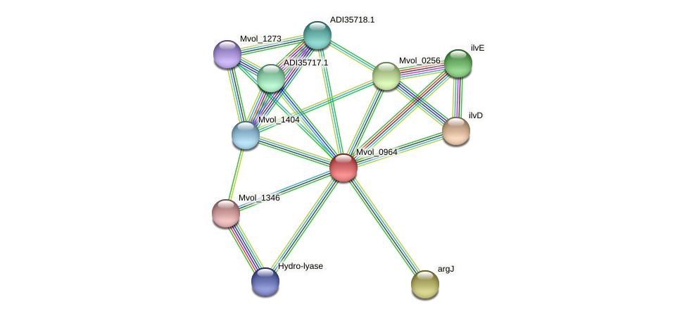 Mvol_0964 protein (Methanococcus voltae) - STRING interaction network