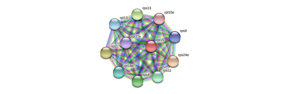 rpl15 protein (Methanococcus voltae) - STRING interaction network