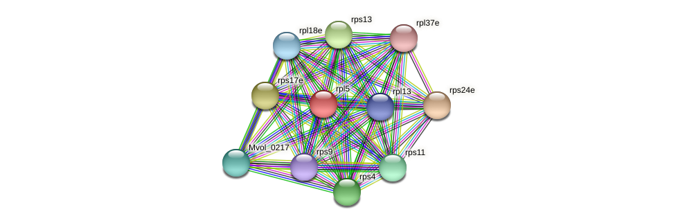 rpl5 protein (Methanococcus voltae) - STRING interaction network