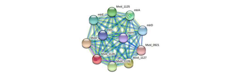 Mvol_1128 protein (Methanococcus voltae) - STRING interaction network
