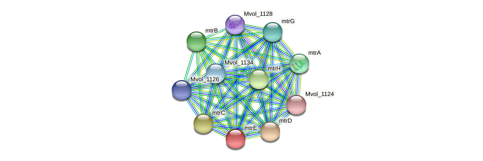 mtrE protein (Methanococcus voltae) - STRING interaction network