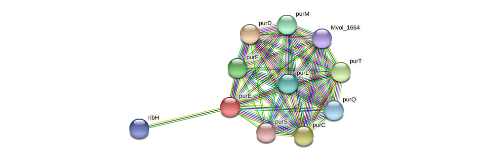 purE protein (Methanococcus voltae) - STRING interaction network