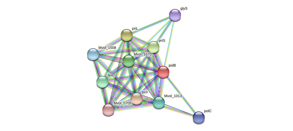 polB protein (Methanococcus voltae) - STRING interaction network
