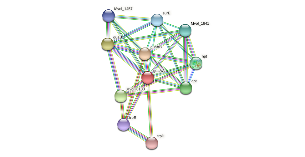 guaAA protein (Methanococcus voltae) - STRING interaction network