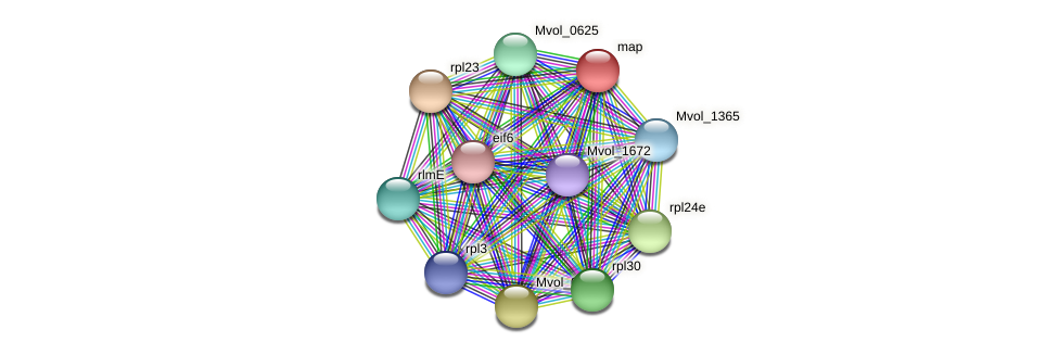 map protein (Methanococcus voltae) - STRING interaction network