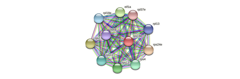 rps19e protein (Methanococcus voltae) - STRING interaction network