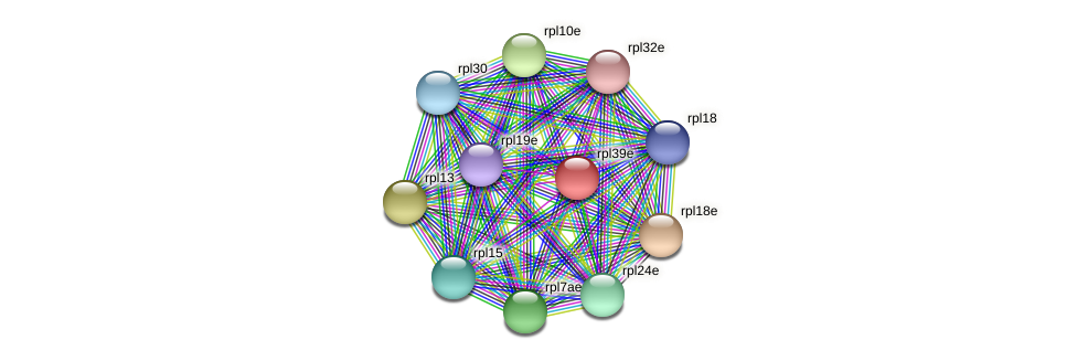 rpl39e protein (Methanococcus voltae) - STRING interaction network
