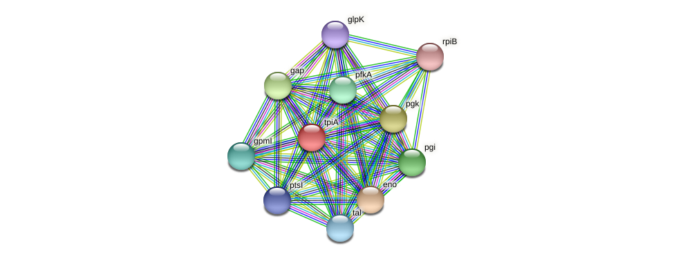 tpiA protein (Leptospira biflexa) - STRING interaction network