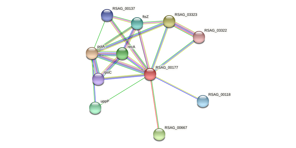 RSAG_00177 protein (Ruminococcus sp. 5139BFAA) - STRING interaction network