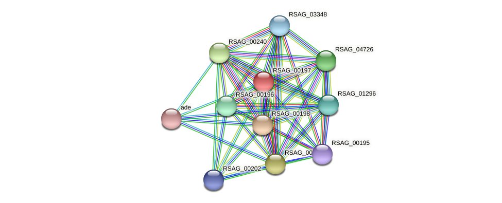 RSAG_00197 protein (Ruminococcus sp. 5139BFAA) - STRING interaction network