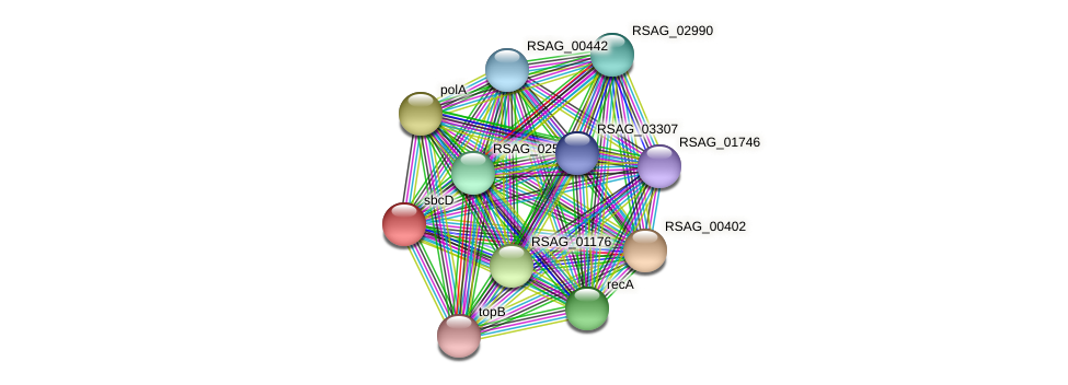 sbcD protein (Ruminococcus sp. 5139BFAA) - STRING interaction network