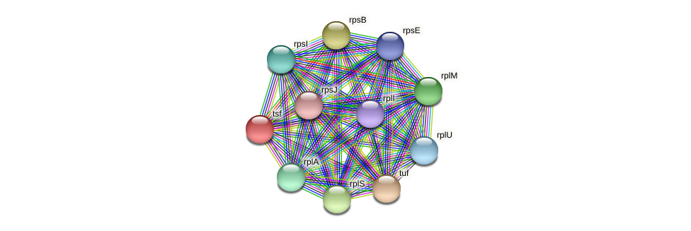 tsf protein (Ruminococcus sp. 5139BFAA) - STRING interaction network