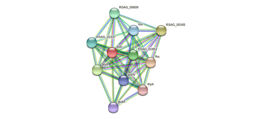 folD protein (Ruminococcus sp. 5139BFAA) - STRING interaction network