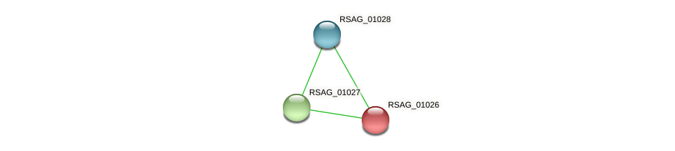 RSAG_01026 protein (Ruminococcus sp. 5139BFAA) - STRING interaction network