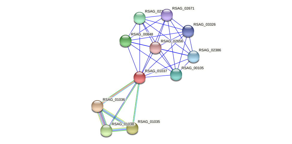 RSAG_01037 protein (Ruminococcus sp. 5139BFAA) - STRING interaction network