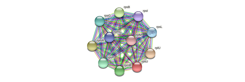 rpsU protein (Ruminococcus sp. 5139BFAA) - STRING interaction network