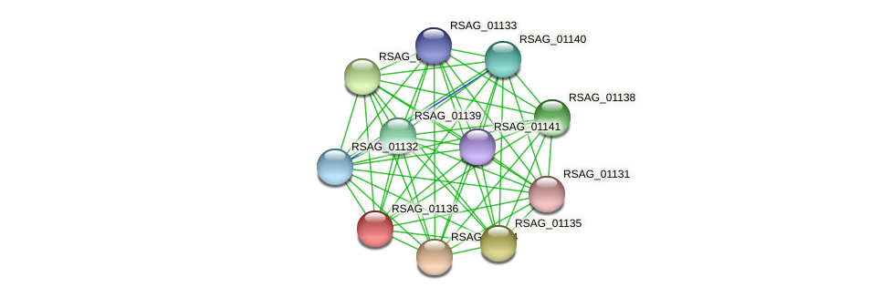 RSAG_01136 protein (Ruminococcus sp. 5139BFAA) - STRING interaction network