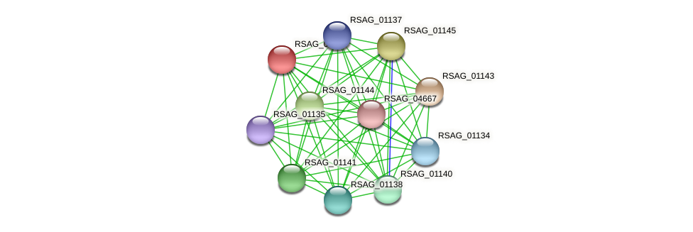 RSAG_01142 protein (Ruminococcus sp. 5139BFAA) - STRING interaction network