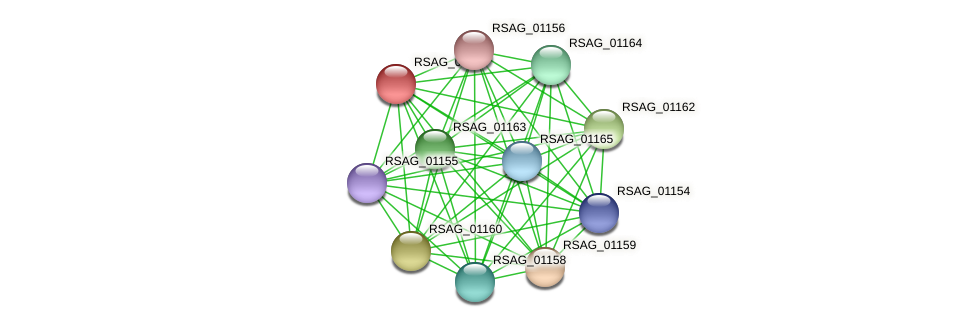 RSAG_01161 protein (Ruminococcus sp. 5139BFAA) - STRING interaction network