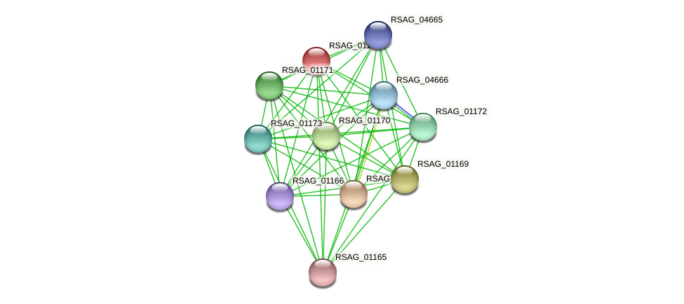 RSAG_01167 protein (Ruminococcus sp. 5139BFAA) - STRING interaction network