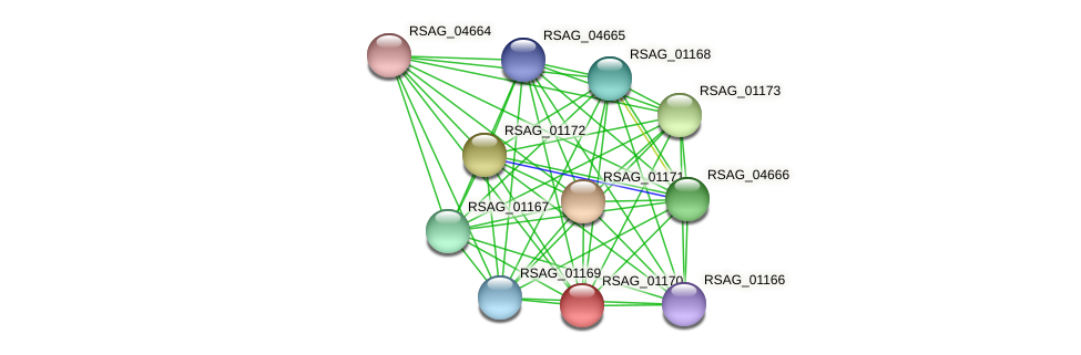 RSAG_01170 protein (Ruminococcus sp. 5139BFAA) - STRING interaction network