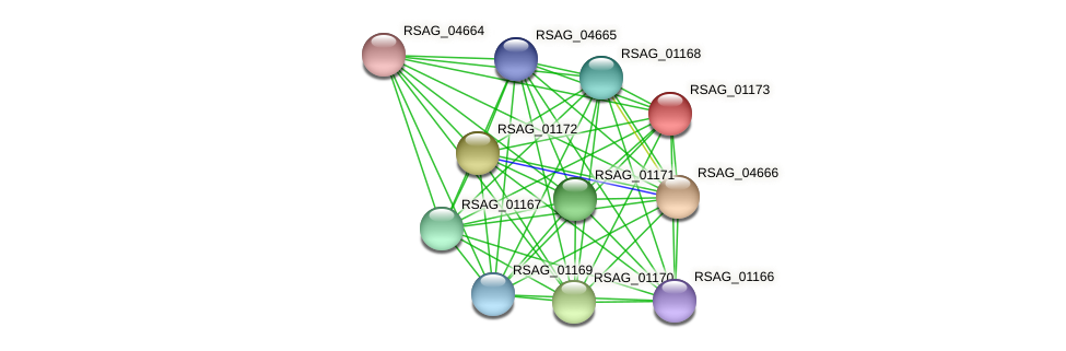RSAG_01173 protein (Ruminococcus sp. 5139BFAA) - STRING interaction network