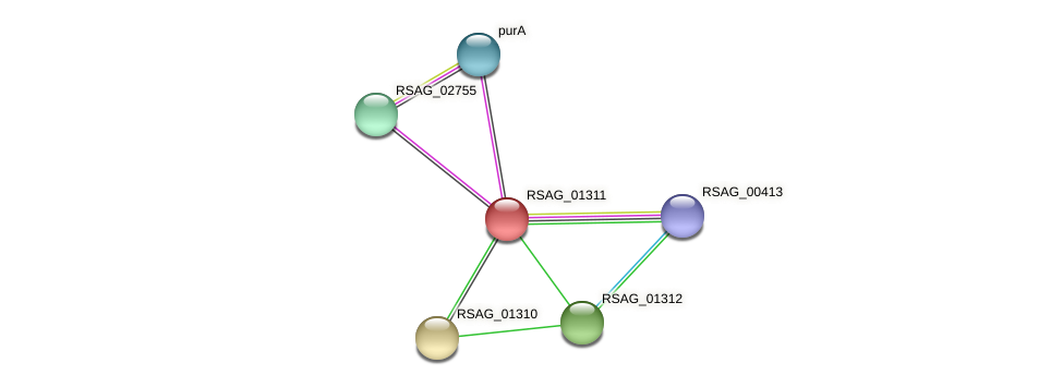 RSAG_01311 protein (Ruminococcus sp. 5139BFAA) - STRING interaction network