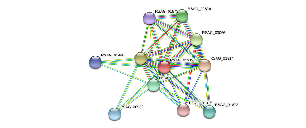 RSAG_01313 protein (Ruminococcus sp. 5139BFAA) - STRING interaction network