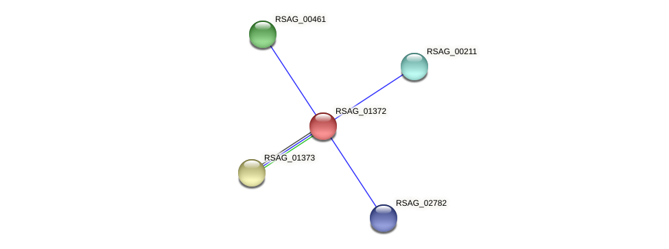RSAG_01372 protein (Ruminococcus sp. 5139BFAA) - STRING interaction network