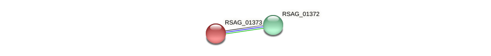 RSAG_01373 protein (Ruminococcus sp. 5139BFAA) - STRING interaction network